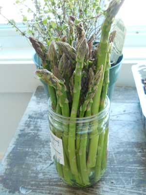 asparagus1_little_house_dunes