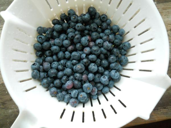 blueberrylavenderjam_little-house-dunes